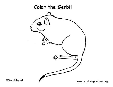 gerbil coloring page exploring nature educational resource