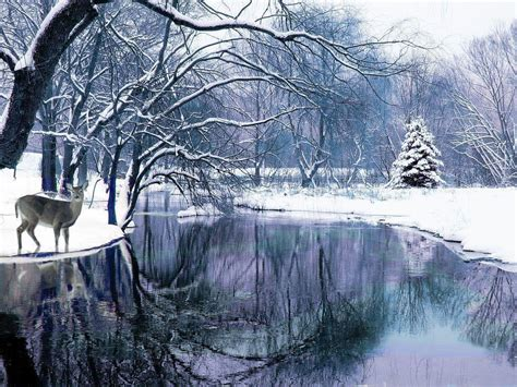wallpaper free snow scenes winter scenes wallpapers free wallpaper cave