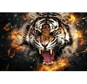 HD Tiger Roaring Face Abstract Wallpaper Images 1080p Photos Pics