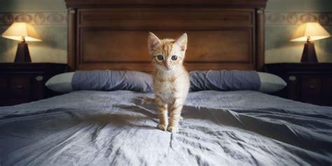 landscape 1429633262 cat on bed jpg