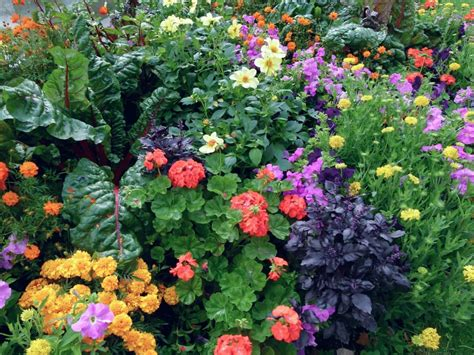 flowers in garden how to plant an edible landscape install it direct