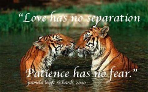 tiger strength quotes inspirational quotesgram tiger strength quotes inspirational quotesgram