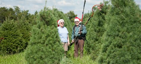 best fragrant christmas tree get fresh fragrant buy a local tree marylands best