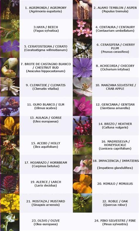 imagenes de flores de bach homeopat 237 a flores bach int 233 rprete energ 233 tico