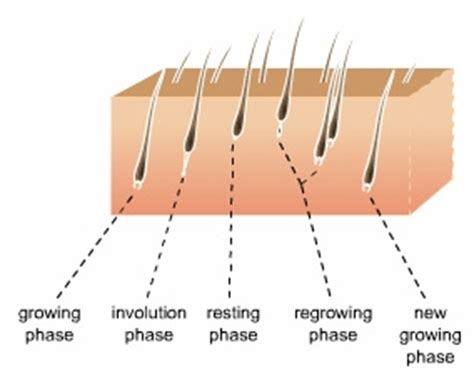Types Of Hair Loss Diseases by The Facts About Hair Loss
