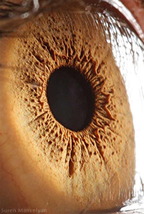 imagenes ojos gratis 25 fotos de ojos tomadas desde muy cerca que te dejar 225 n