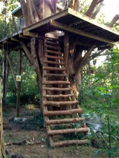 1000 ideas about tree forts on tree houses