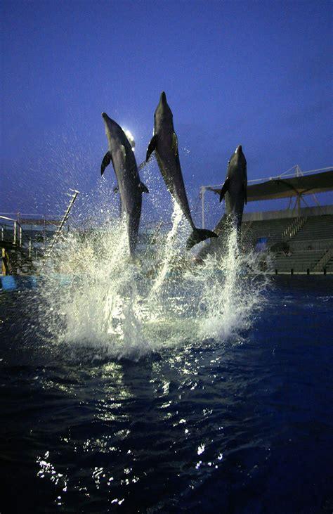 delfines amigos delfines nuestros amigos inteligentes