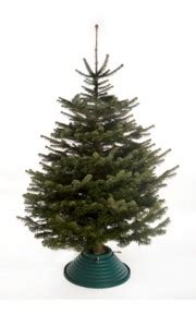choose real not fake 187 best christmas trees