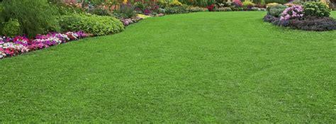 it flaunt it getting the lawn