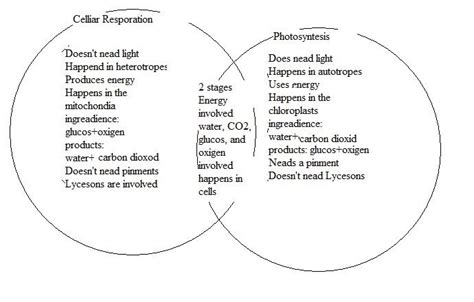 venn diagram photosynthesis and cellular respiration 8th grade science class the class of t 7 december