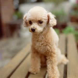 15 hypoallergenic dogs and cats health com