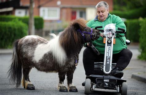 caballo poni cojiendo caballo poni folla mujer sexo con poni running horse hd wallpapers equestria