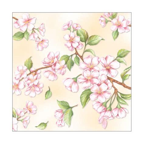 fiori di pesco disegno arte disegni pittura