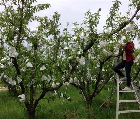pesticides for fruit trees clemson organic research bags 1 million