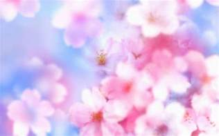 cherry blossom image cherry blossom desktop backgrounds wallpaper cave