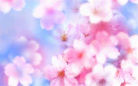 flower blossom wallpaper cherry blossom desktop backgrounds wallpaper cave