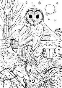 owl coloring pages bestofcoloring
