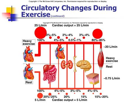 cardiac output blood flow and blood pressure ppt