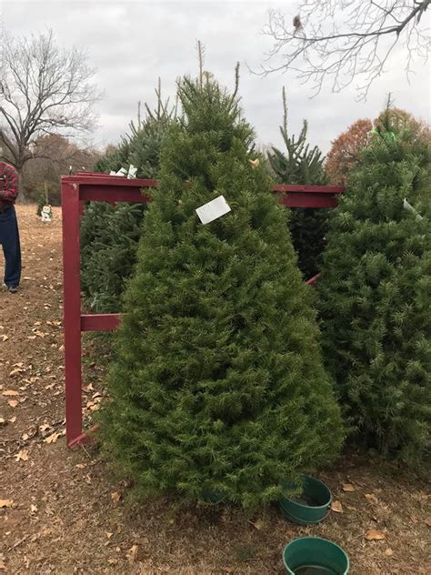 christmas trees at wilkinsons wilkinson tree forest posts