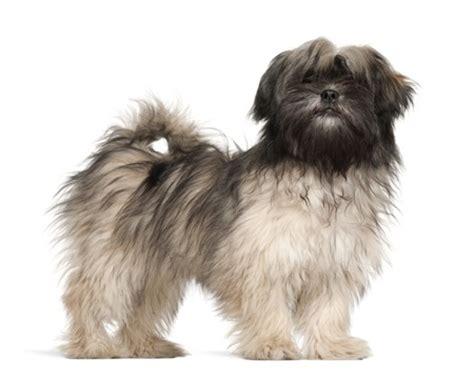 argos dog house the 12 dog breeds of christmas argos pet insurance
