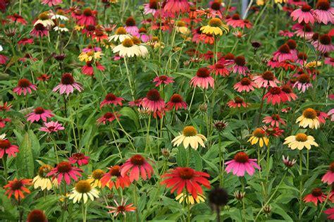 catalogo piante da giardino catalogo piante perenni e graminacee vivaio con vendita