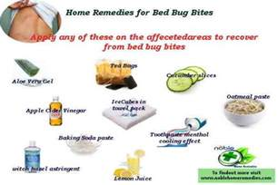 home remedies for bed bug bites noble home remedies