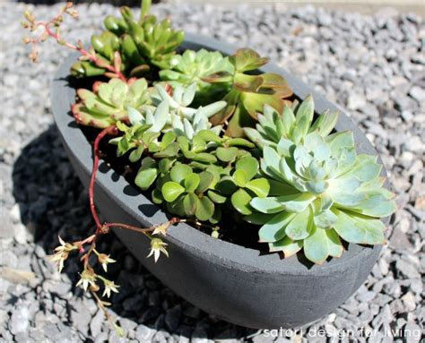 what i ve learned about caring for outdoor succulents