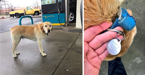 puppy gas enjoying adventure meets at the gas station
