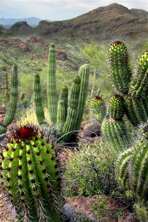 plant life cacti and succulents