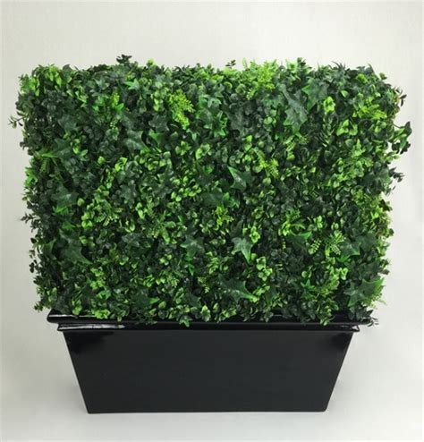 Hedge In Planter Boxes by Planterboxes Boxwood Hedges