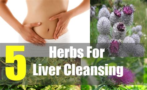 Top 5 Best Liver Detox Herbs by 5 Herbs For Liver Cleansing 5 Herbs To Cleanse Your
