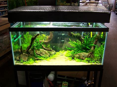 freshwater aquascaping ideas if you build a freshwater aquarium on january 1st when