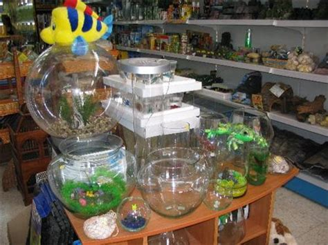 pet shops in bhopal list of famous pet stores in bhopal