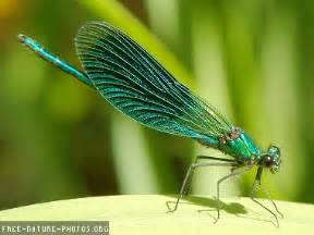 dragonfly exploration of the sacred conscious