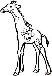 Galerry coloring page for giraffe