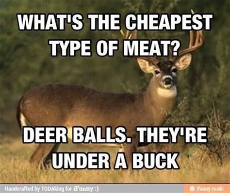 Funny Deer Memes - 151 best images about now that s funny on pinterest deer