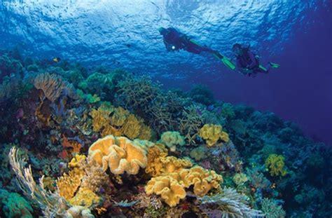 dive di keindahan bawah laut wakatobi wisata nusantara
