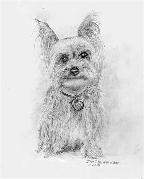 how to a yorkie puppy how to draw yorkie puppy coloring pages