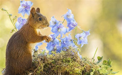 how to keep squirrels out of flower beds keeping squirrels out of the garden