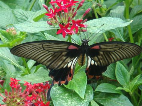Butterfly Garden Ma by Three Days In Boston Travel Guide On Tripadvisor