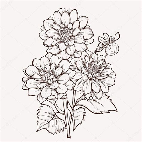 vector flower isolated on white background hand drawn