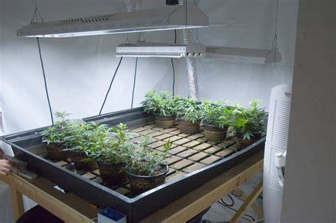 hydroponic grow room top tips for keeping your marijuana grow room clean