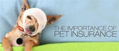 puppy insurance veterinary insurance links for pets through growing years