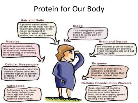 5 proteins in our proteins and amino acids