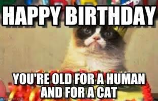 58 grumpy cat birthday wishes