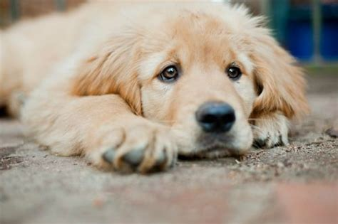 sad puppy love sad little puppy the more people i meet the more i love