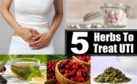 excellent herbs to treat uti urinary tract infection