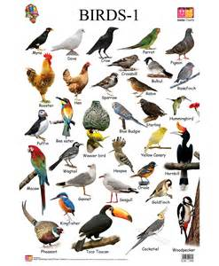 Gallery images and information indian birds chart