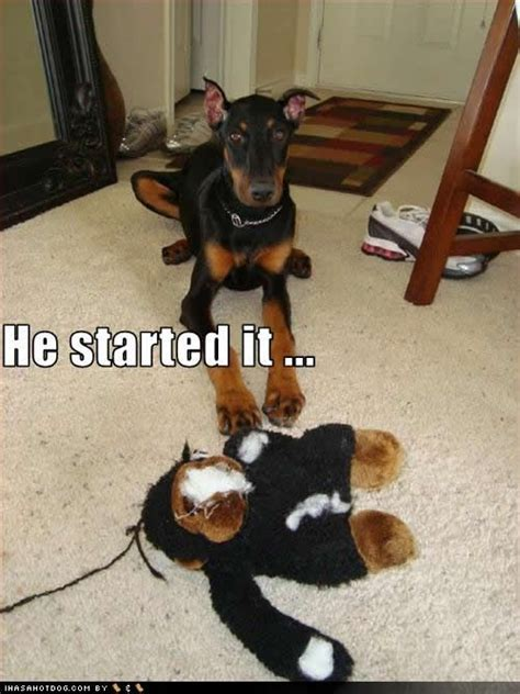his name was my with a remarkable doberman pinscher books 900 best images about of shame on
